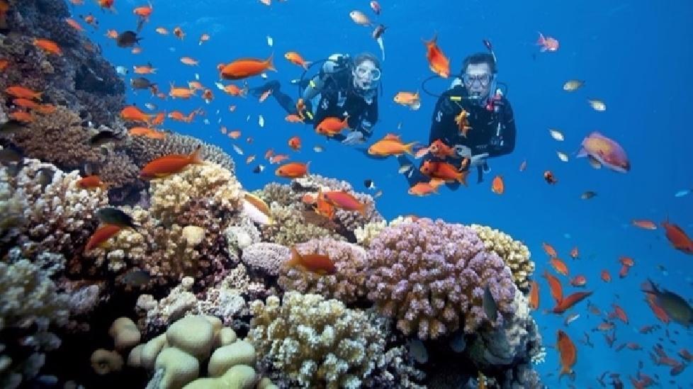 Mùa hè đến Nha Trang nhất định bạn cần trải qua 3 kiểu lặn dưới đây