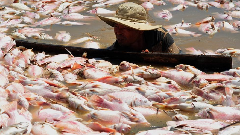 Ngư dân lâm cảnh trắng tay khi cá chết trắng sông La Ngà