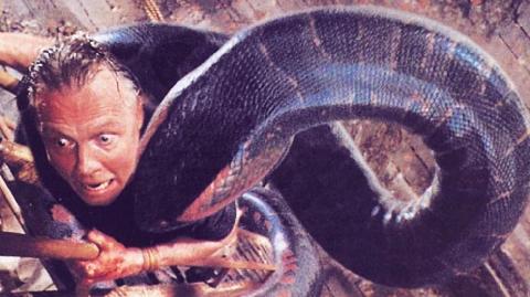 Vừa được cứu, trăn khổng lồ dài 10m siết cổ, suýt giết chết ân nhân