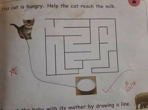 Trí thông minh của học trò.